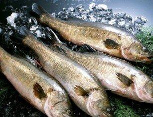 Польза и вред рыбы минтай